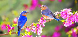 spring-birds-481x230